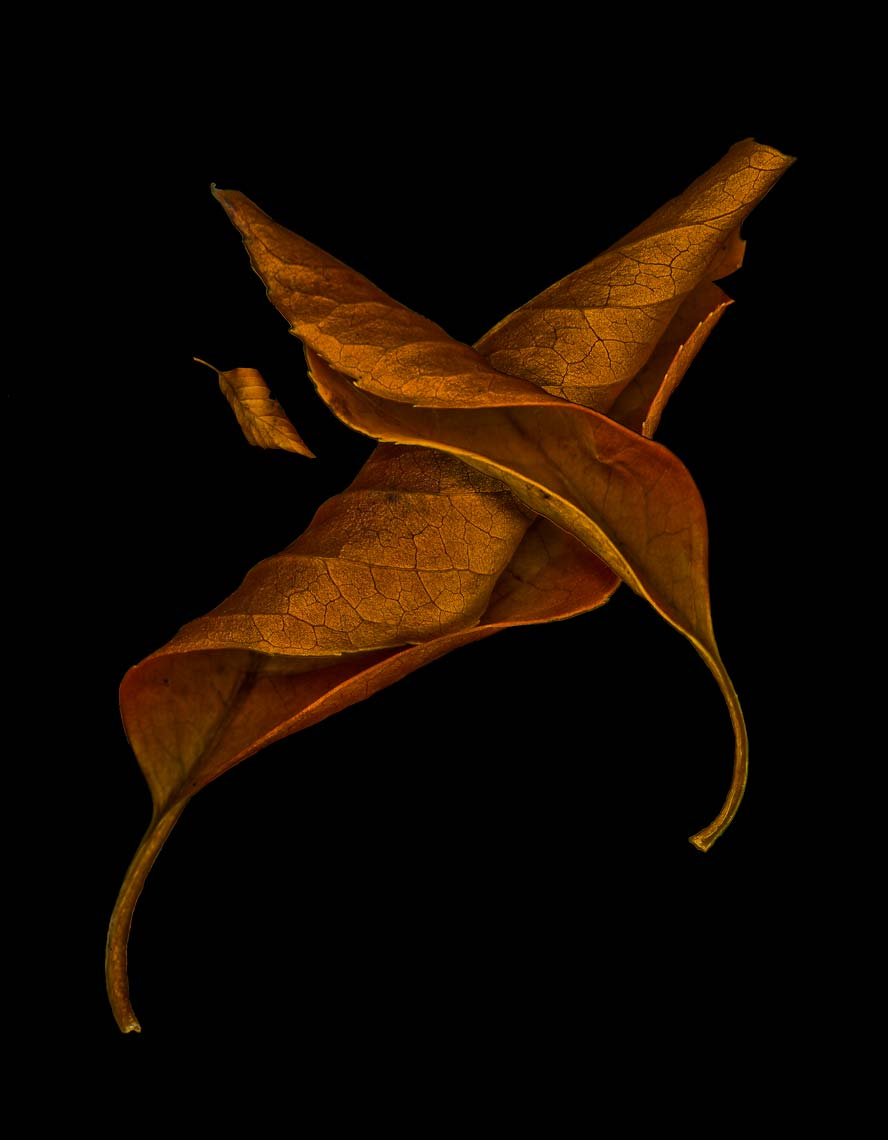 Fine art, nature series, Andy Goodwin Photography, DeadLeafs
