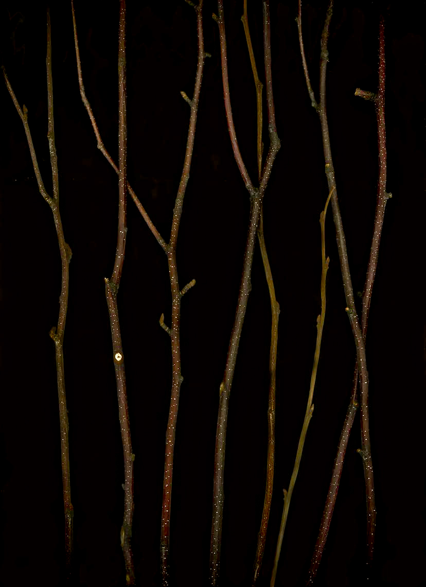 Fine art, nature series, Andy Goodwin Photography, twigs